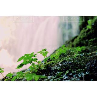 自然の写真・画像素材[315412]