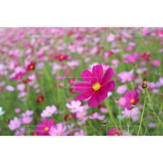 自然の写真・画像素材[315429]