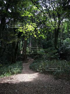 森林の写真・画像素材[316025]