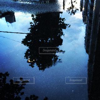 木の写真・画像素材[317530]