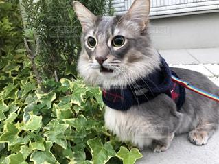 猫の写真・画像素材[524354]