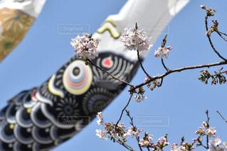 No.417205 桜