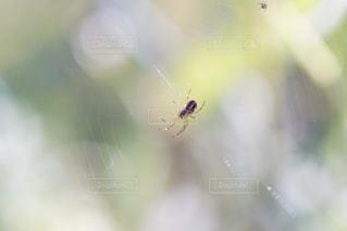 No.428729 蜘蛛の巣