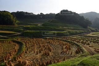 背景の木と大規模なグリーン フィールド - No.763979