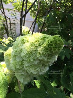 花の写真・画像素材[524477]