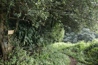 山道の写真・画像素材[711577]