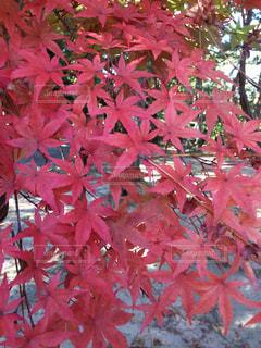 秋の写真・画像素材[318099]
