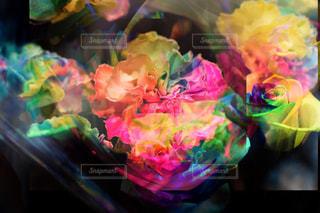 花の写真・画像素材[316342]