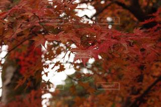 秋の写真・画像素材[316453]