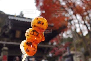 秋の写真・画像素材[316454]