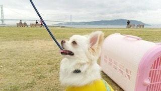 犬の写真・画像素材[22005]