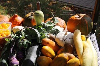 野菜の写真・画像素材[321158]