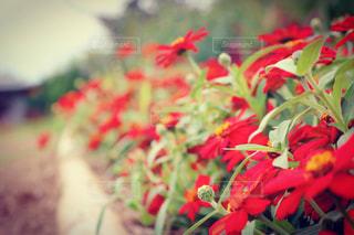 近くの花のアップの写真・画像素材[856812]
