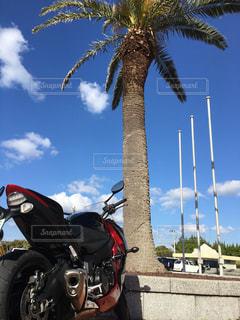 バイクの写真・画像素材[317495]