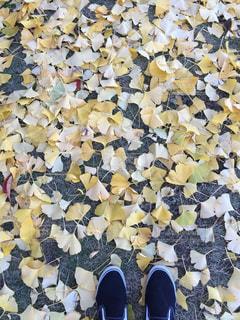 秋の写真・画像素材[318253]