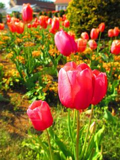 花の写真・画像素材[320778]