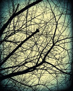 枯れ木の写真・画像素材[317194]