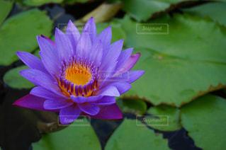 花の写真・画像素材[398021]