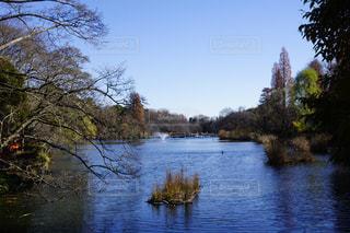 木々 に囲まれた水の体 - No.968189