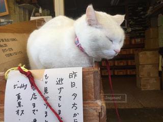 猫 - No.317944
