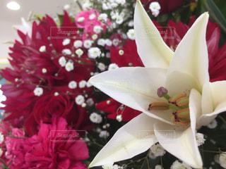 花の写真・画像素材[323302]