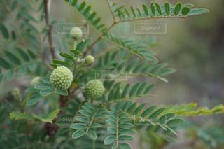 植物の写真・画像素材[384736]