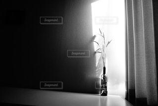 モノクロの写真・画像素材[384747]
