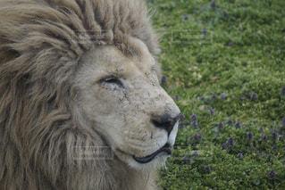 動物園の写真・画像素材[384792]