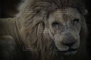 動物園の写真・画像素材[384793]