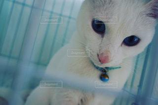 猫の写真・画像素材[433556]