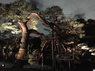 東京の写真・画像素材[320146]