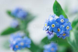花の写真・画像素材[2912]