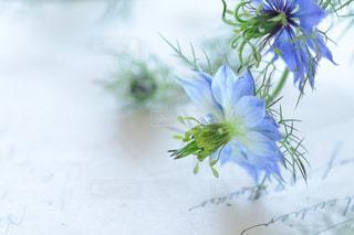 花の写真・画像素材[2923]