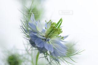 自然の写真・画像素材[2922]