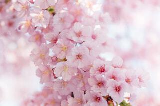 花のクローズアップの写真・画像素材[4278172]