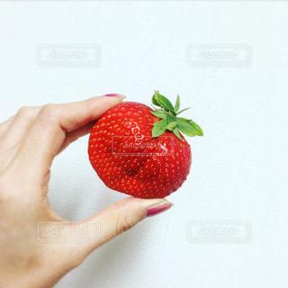 食べ物の写真・画像素材[337462]