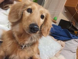 犬の写真・画像素材[337489]