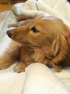 犬の写真・画像素材[344252]
