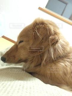 犬の写真・画像素材[344254]