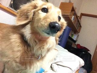 犬の写真・画像素材[345230]