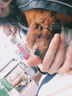 犬を持っている人の写真・画像素材[775420]