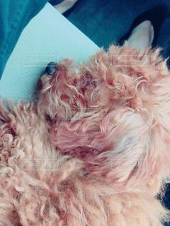 ベッドの上に横たわる犬の写真・画像素材[878197]