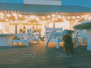 建物の前で椅子に座って猫の写真・画像素材[878208]