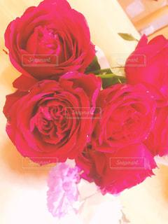植物にピンクの花の写真・画像素材[878216]