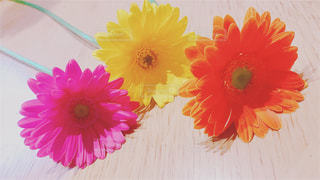 近くの花のアップの写真・画像素材[908083]