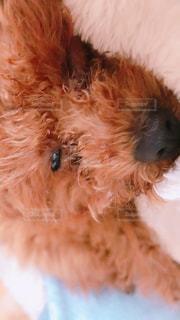 近くに犬のアップの写真・画像素材[908085]