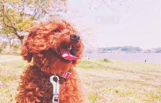草の中に座っている犬の写真・画像素材[1119552]