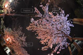 花の写真・画像素材[318140]