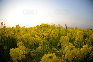 花の写真・画像素材[318146]