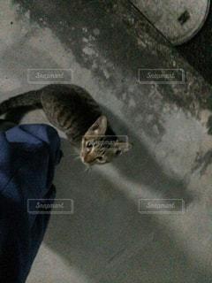 猫の写真・画像素材[318195]